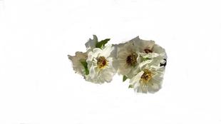 Květinová ozdoba FLOX sakura bílá
