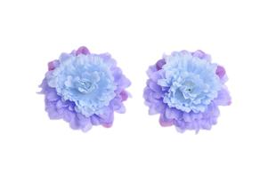 Astra modro-fialová