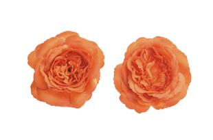 Květinová ozdoba FLOX kamélie oranžová velká