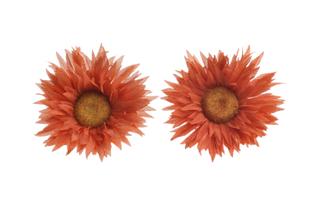 Květinová ozdoba FLOX třapatka oranžová