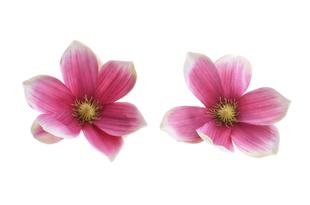 Květinová ozdoba FLOX magnólie růžová